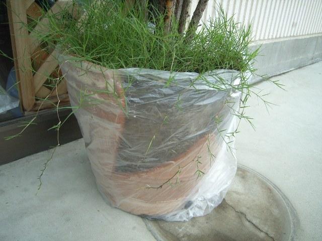 台風で倒されて割れた植木鉢