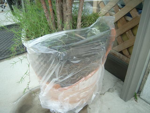 テラコッタの植木鉢が割れた