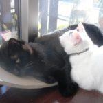 我が家の猫二匹