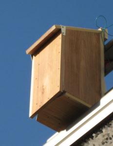 朝日を浴びる巣箱