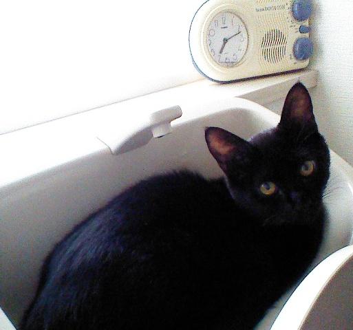 防水ラジオ時計と猫