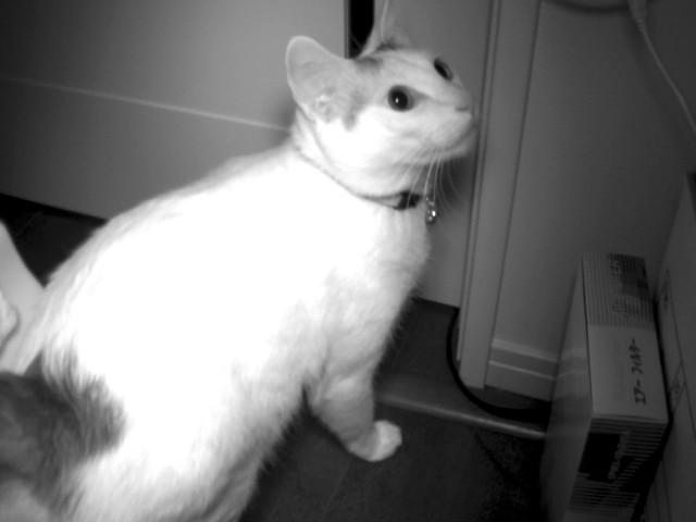 赤外線LED投光器で猫を照らしてみた